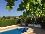 Detached villa with private pool and olive groves