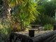 Fish pond top garden area
